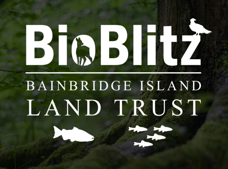 The BioBlitz Logo